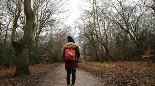 倫敦郊遊森林小徑
